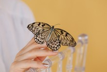 Crop Woman's Hand Holding Butterfly