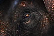 Close Up Of Elephant's Eye