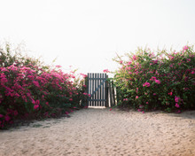 Beach Yard With Blooming Bushes