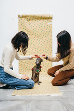 Two Girls Decorating A Dog As A Gift.