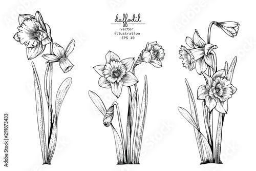 Sketch Floral Botany Collection Wallpaper Mural