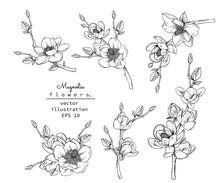 Sketch Floral Botany Set. Magn...