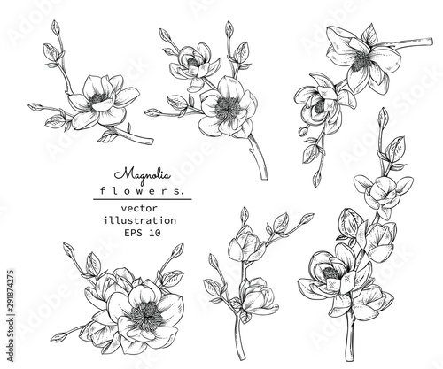 Sketch Floral Botany set Wallpaper Mural