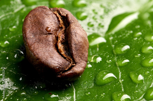 Fototapeta Green Leaf With Water Drops Lying On The