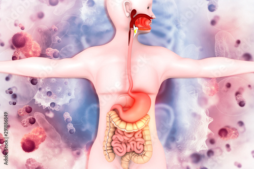 Fotografia  Human digestive system on scientific background