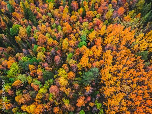 Obraz premium Piękny jesienny las z żółtymi i czerwonymi drzewami, widok z lotu ptaka