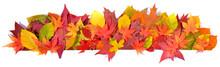 Autumn Leaves - Panorama Backg...