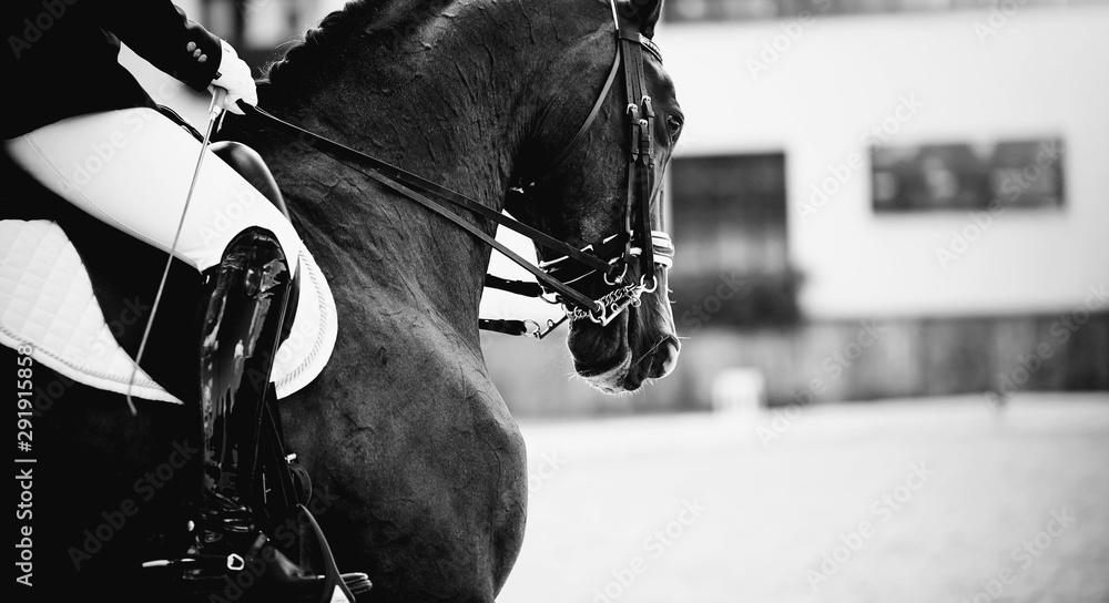 Fototapeta Equestrian sport. Dressage of horses in the arena.