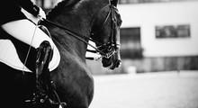 Equestrian Sport. Dressage Of ...
