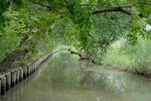 水路に樹木の枝葉が垂...