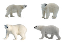Set Of Four Images Of Polar Be...