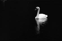 Swan Lake - Black & White