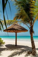Umbrella And Palm Trees