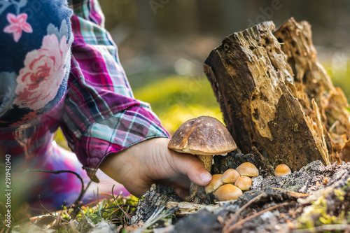 Fotografie, Obraz  Close up of a girl picking a mushroom on wild forest background with grass, moss and sticks