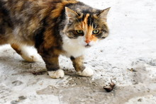The Cat Is Caught By A Mole In...