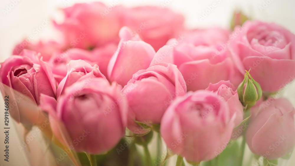 Fototapeta Bouquet of pale delicate peony roses wrapped in cellophane