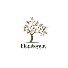Logo Flamboyant, Elegance Tree Vector