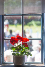 Red Geranium In White Pot On Window Ledge Of Vintage Window With People Outside On Sunny Day
