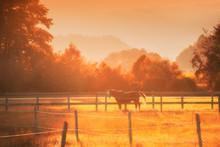 Sunset Horse Fence