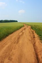 Dirt Road In A Wheat Field