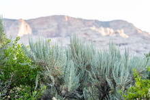 Plants In Foreground At Green River Campground In Dinosaur National Monument Park During Sunrise With Sunlight On Rocky Cliff