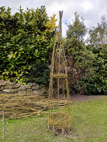 Valokuva Woven willow obelisk freshly made from green branches, with cut willow in background ready to make more