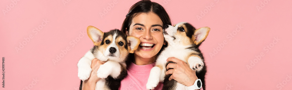 Fototapeta smiling woman holding Welsh Corgi puppies, isolated on pink