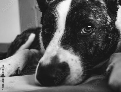 Fotografie, Obraz  portrait of a dog
