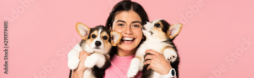 smiling woman holding Welsh Corgi puppies, isolated on pink Canvas Print
