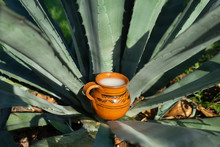 """Mexican Fermented Beverage Called """"Pulque"""" In Clay Cups With Agave Cactus"""
