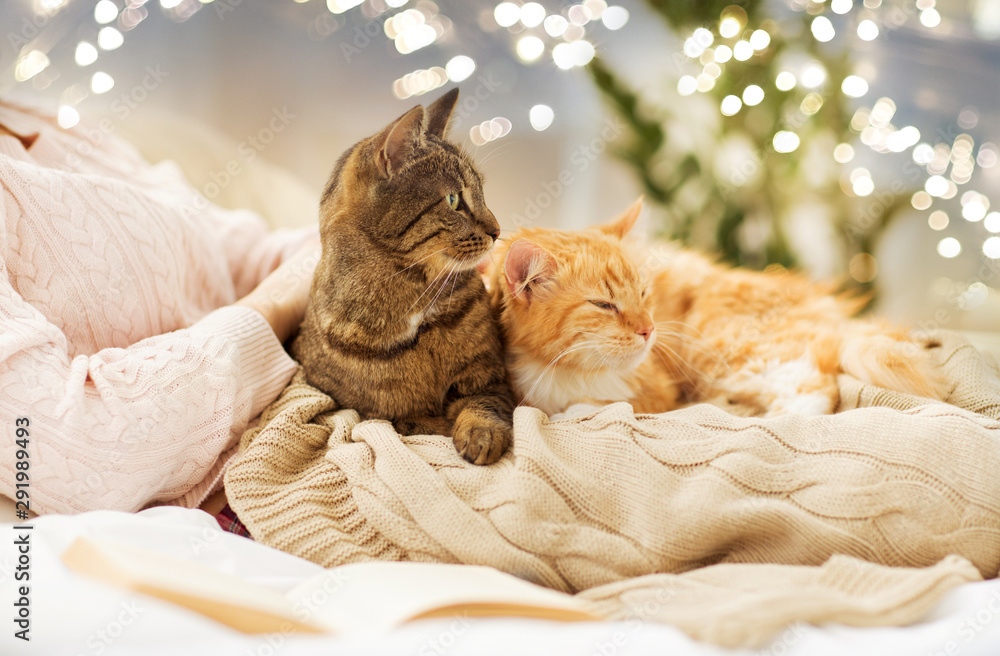 Fototapety, obrazy: pets, hygge and people concept - close up of female owner with red and tabby cat in bed