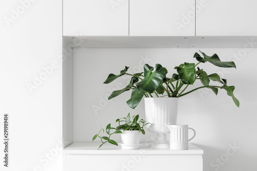 Modern houseplants on a white drawer in the white living room, minimal creative Canvas Print