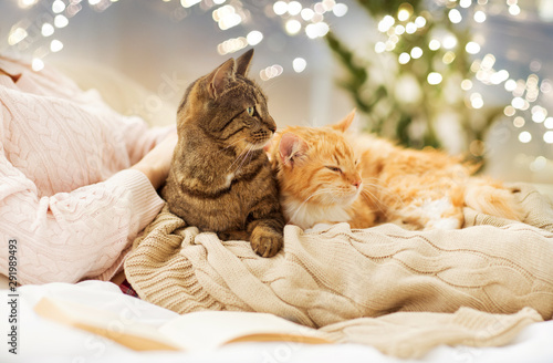 Poster Kat pets, hygge and people concept - close up of female owner with red and tabby cat in bed