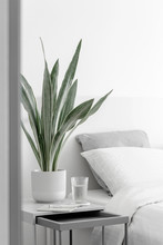 Modern Houseplants In The Whit...