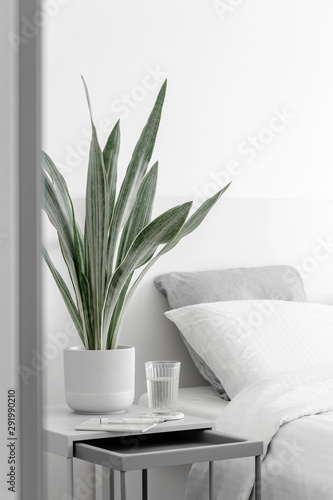 Modern houseplants in the white bedroom, minimal creative home decor concept, Sa Canvas Print
