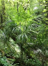 Dense Vegetation In A Tropical...