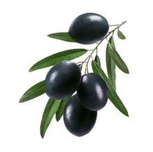 Long Branch Of Black Olives Isolated On White Background. Package Design Element With Clipping Path