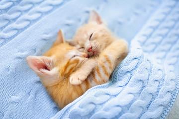 Baby cat. Ginger kitten sleeping under blanket