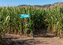 Keep Going Sign Inside Corn Ma...