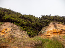 Forest Clinging To Coastal Bluff