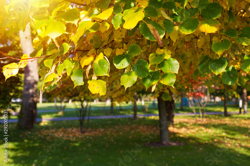 Foto auf AluDibond Gelb Tree leaves in autumn. Autumn nature landscape background. Toned and blurred