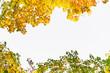 Leinwandbild Motiv view of tree branch with yellow leaves autumn fall season