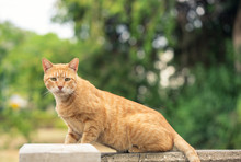 Orange Tabby Cat Sitting Outside