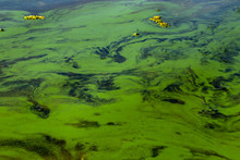 Algae Bloom. Polluted Green River Water. Smell Of Sediment In A Stagnant Pond. Toxic Bacteria Pollute Waterways. Harmful Waste, Low Oxygen Level. Dirty Grass Stains On The Surface Of The Lake