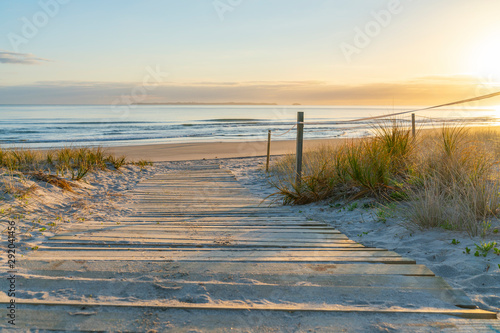 Golden glow of sedge growing on sand as dune protection Wallpaper Mural