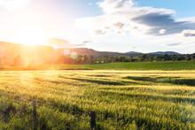 Rural Landscape In Scotland At...