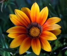Fire Flower 2