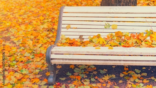Fototapeta Fallen Leaves On Wooden Bench In Empty Park Autumn Background Bench In Autumn Landscape City Park With Yellow Leaves A Street Bench At