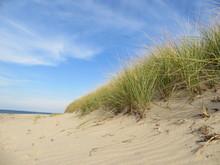 Marram Grass On The Beach At C...