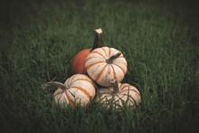 Pumpkins Sitting In The Grass